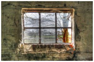 Rear Window by DrDrum666