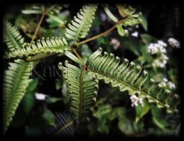 Morning Fern by CristaliaART