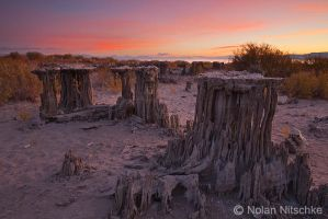 Mono Lake Sand Tufa Sunrise by narmansk8