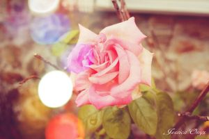 The Pink Rose by JessicaOnyx
