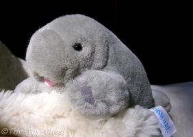 Sea World Manatee Mini Plush by The-Toy-Chest