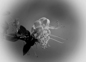 003 13bw by Placi1