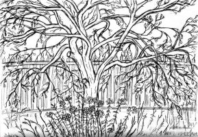 Pencil sketch  - apple tree by ErynLuin