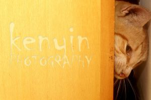 Kitty In Action by kenyin
