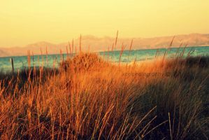 late summer afternoons by KCELphotography