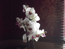 Dining Room Orchid by YesIamEccentric