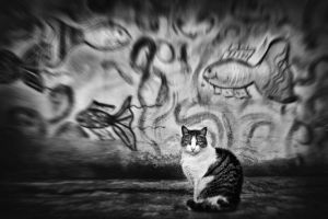 Dreams of one cat by Vlad-Off-kru