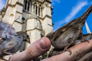 Sparrows and Notre Dame by DrNoVodka