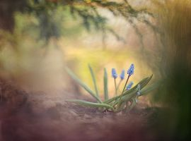 Spring is waking up by Lumpy2