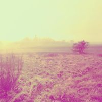 Landscape 0003 by Toomi5