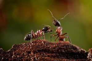 The Pedicure Ant by MissFlykt
