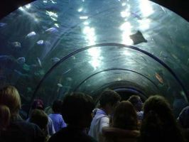 Fish Overhead by saabe