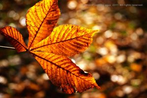 Golden Leaf by MoonPriestessLaguz