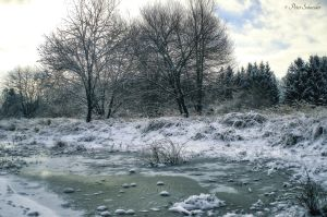Frozen heather. by Phototubby