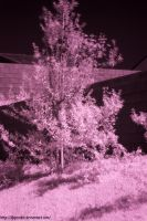infrared tree by djqcookie