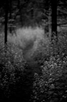 down riding-hood's path2 by chirilas