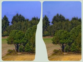 Edge of the forest 3D :: HDR Cross-Eye Stereoscopy by zour