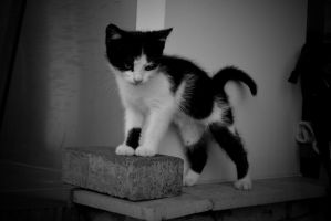 009bw by Placi1
