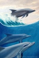 Dolphins Wave by Crynyd