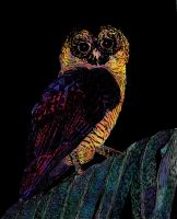Midnight Owl (Color) by Grismalice