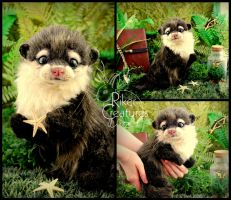 Gilly the Baby Otter by RikerCreatures