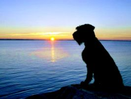 Dogg Wathing The Sunrice In Arcipelago by eskile
