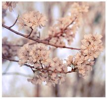 Breez of spring by Serend1pity
