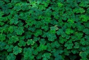 Find the lucky penis clover by NatVon