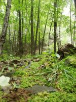 Forest-stock by AJK-Original-Stock