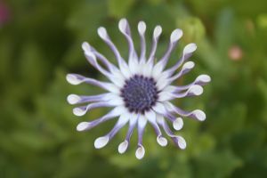 Otherworldly Flower by Manda-of-the-6