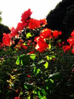 Paint the flowers red. by FlashOfGrey