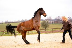 Free Dressage- Taming the Wild by LuDa-Stock