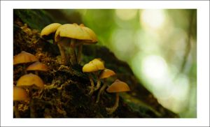 Tree Stump Fungi by Cameron-Jung