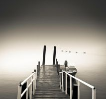 Ducks at the Dock by DerekToye