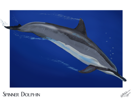 Spinner Dolphin Blue Waters by autumnalangel