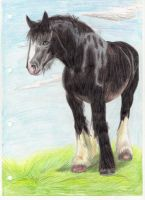 Shire horse by RACHLOVEDRAW