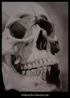 Skull by darkerwithin