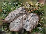 Life cycle of a leaf by SnapperRod
