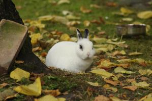 A rabbit with autumn leaves around by ProjektGoteborg