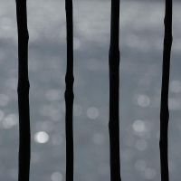 four poles by grevys