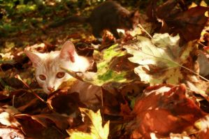 Autumn Kittens by Paranoid-Duckkie