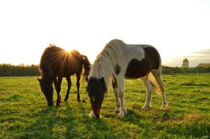 horses by sys66