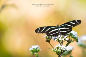 Spread Wings by TabithaS-Photography