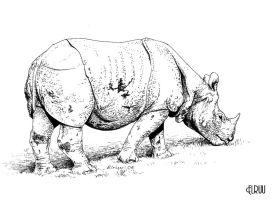 Rhino in ink by Elruu