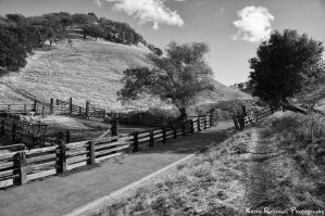 Countryside Walnut Creek by KasraRassouli