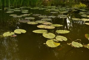 Water Lilies Stock 5 by Sisterslaughter165