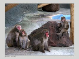 Life in Zoo 16 by firework