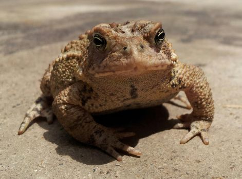 Here is a Toad by rcbif