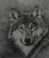 GREY WOLF by graphitemyers