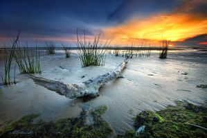 the shallows by hotonpictures